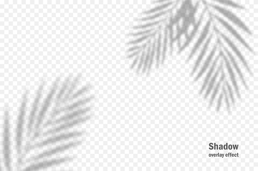 Vector shadow overlay effect. Transparent soft light and shadows from branches, plant and leaves. Mockup of transparent leaf shadow and natural lightning.