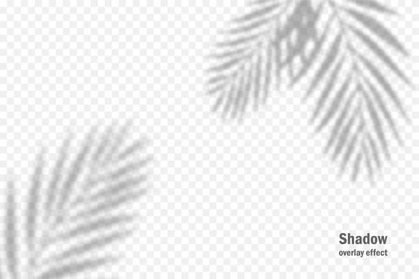 bildbanksillustrationer, clip art samt tecknat material och ikoner med vektorskugga överlägg effekt. transparent mjukt ljus och skuggor från grenar, växter och löv. mockup av transparent bladskugga och naturliga blixtar. - skuggig