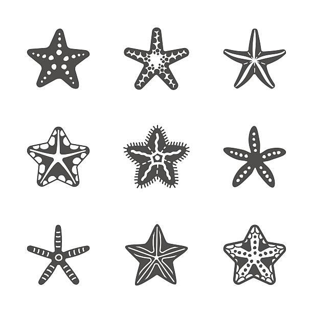 벡터 형태가 세트마다 다양한 바다빛 불가사리류 - 불가사리류 stock illustrations