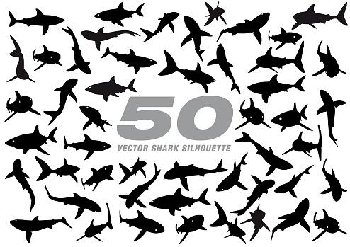 50 Vector Shark Silhouette