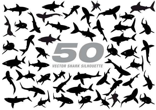 50 Vector Shark Silhouette Eps10 vector illustration with layers (removeable) and high resolution jpeg file included (300dpi). great white shark stock illustrations