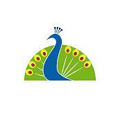 Vector sign Peacock