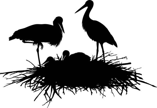 ilustrações de stock, clip art, desenhos animados e ícones de vector silhouette family of storks in the nest - bills couple