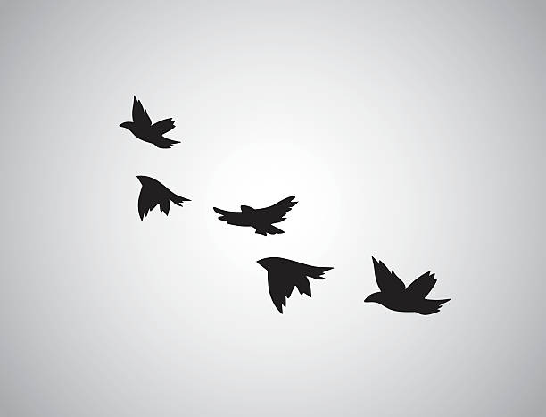 vector silhouette flying birds on white background. tattoo - birds stock illustrations