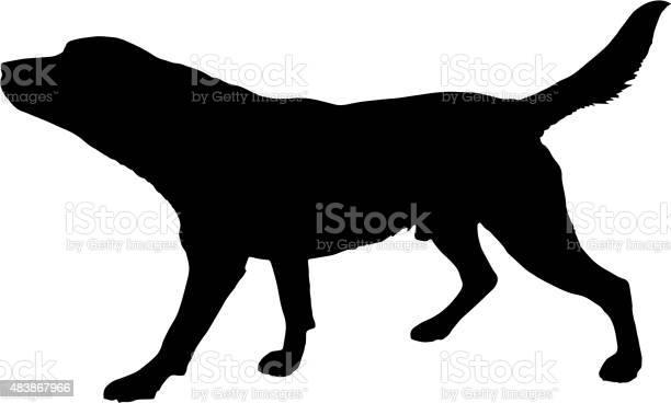 Vector silhouette of a dog vector id483867966?b=1&k=6&m=483867966&s=612x612&h=wgsfsn5b2xgvk6wonxee140 q8xx6rvvui6ij5g80xu=