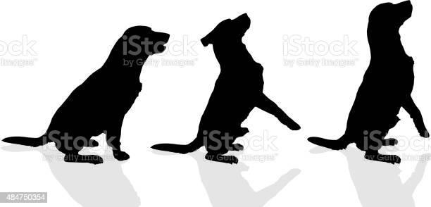 Vector silhouette of a dog vector id484750354?b=1&k=6&m=484750354&s=612x612&h=e2crgjngde9jt8jitqikgqtwrgivqk4ddmy9nsvtu6s=