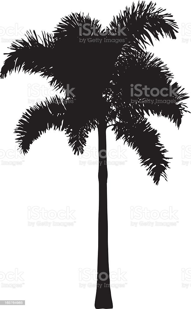 Vector Silhouette of a Palm Tree Isolated on White Background royalty-free stock vector art