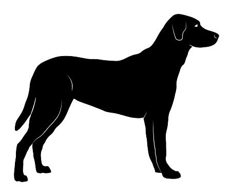 Vector Silhouette Of A Standing Dog With Body Details