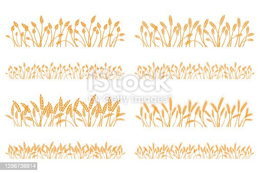 istock Vector silhouette of wheat. Set. Wheat in a field on a white background 1256736914
