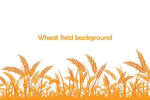 Vector silhouette of wheat. Wheat in the field