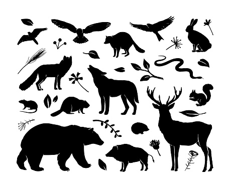 Vector silhouettes animals set. Deer, hare, fox, hedgehog, squirrel, wolf, bear, snake, beaver, raccoon, mouse, wild boar and birds. Black silhouettes animals isolated on white