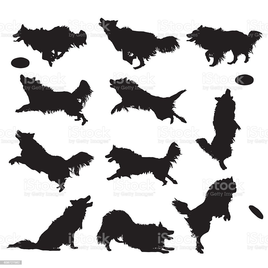 Vector Silhouettes of a Border Collie dog vector art illustration