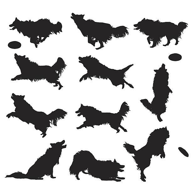 vector silhouettes of a border collie dog - collie stock-grafiken, -clipart, -cartoons und -symbole