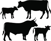 vector silhouettes of a bull, a cow and a calf
