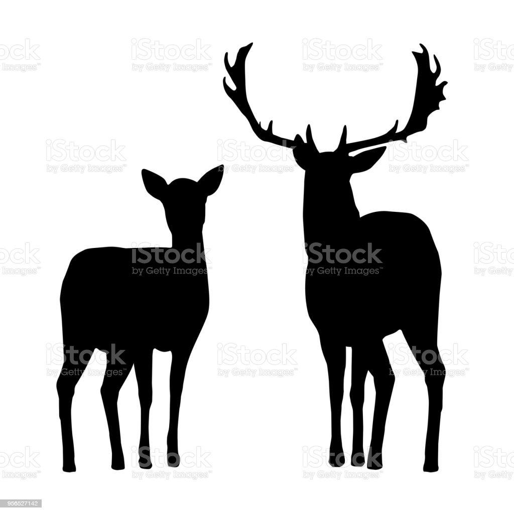 Vector silhouettes de cerfs et de hind, isolé sur fond blanc - Illustration vectorielle
