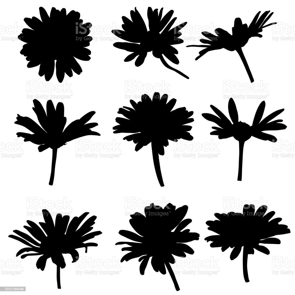 Vector Silhouettes Of Drawing Daisy Flowers Stock Vector Art More