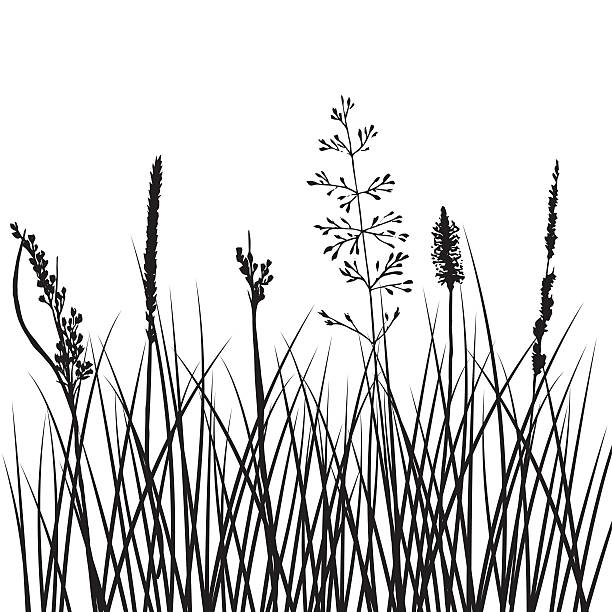 stockillustraties, clipart, cartoons en iconen met vector silhouettes of flowers and grass - grassenfamilie
