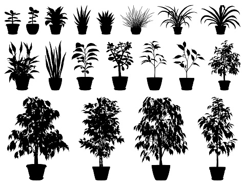 Set of vector silhouettes of potted plants. Ficus, Spathiphyllum, Chlorophytum, Sansevieria, Crassula, Aloe