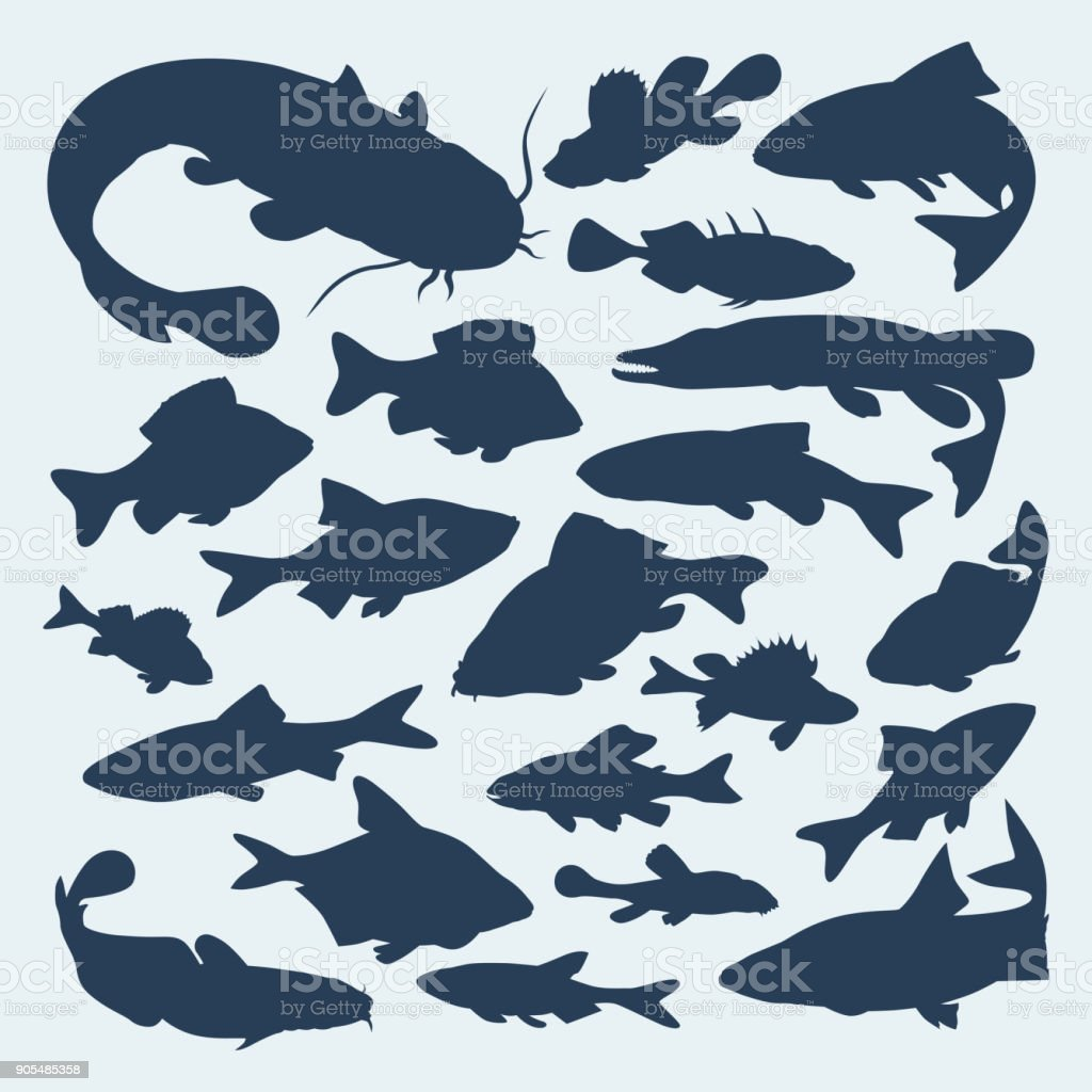 Vector silhouettes of river fish vector art illustration