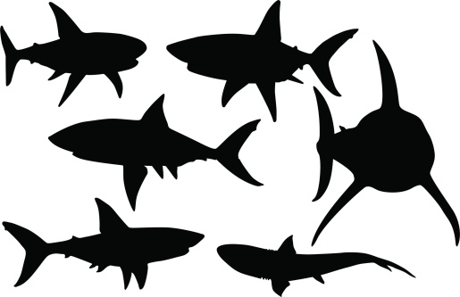 Vector silhouettes of various sharks in black and white