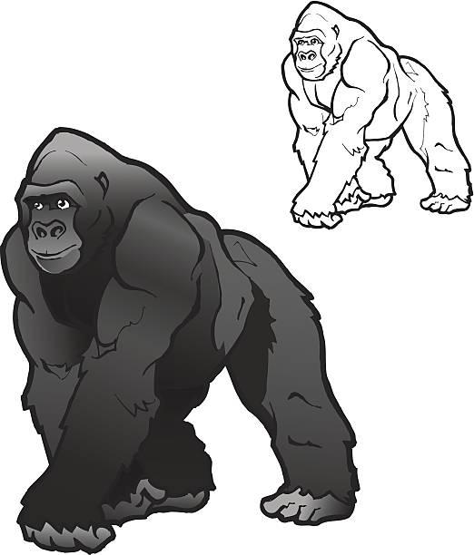 ilustraciones, imágenes clip art, dibujos animados e iconos de stock de gorila lomo plateado ilustración vectorial - gorila
