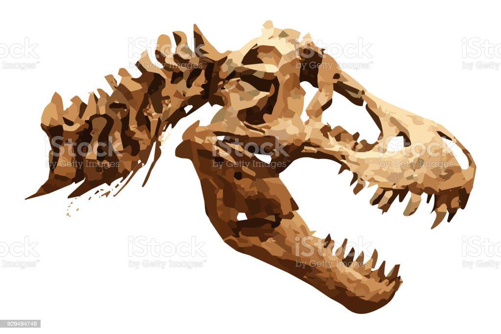 Vector skeleton of Tyrannosaurus rex ( T-rex ) on isolated background . Skull and Neck vector art illustration