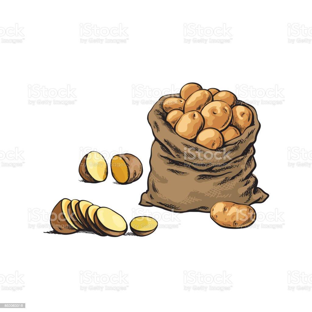 vector sketch bag, raw sliced potato set vector art illustration