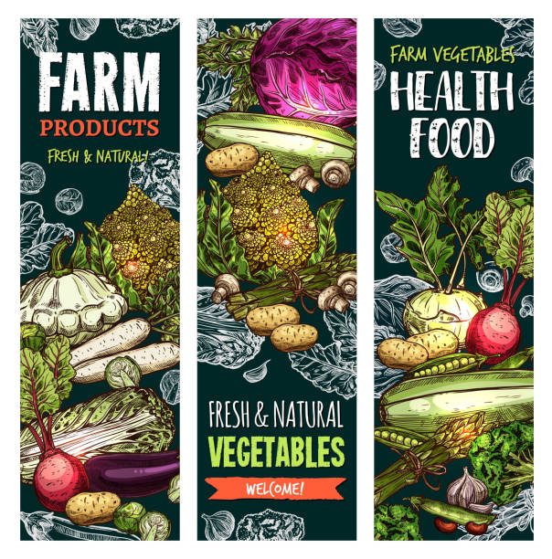 vector sketch banners of natural farm vegetables - freshness stock illustrations, clip art, cartoons, & icons