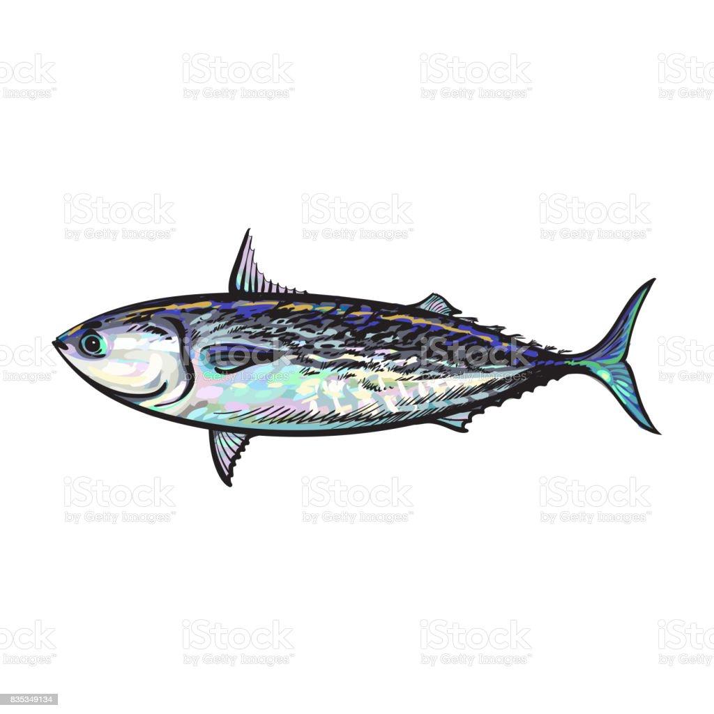 vector sketch cartoon sea fish tuna isolated vector art illustration