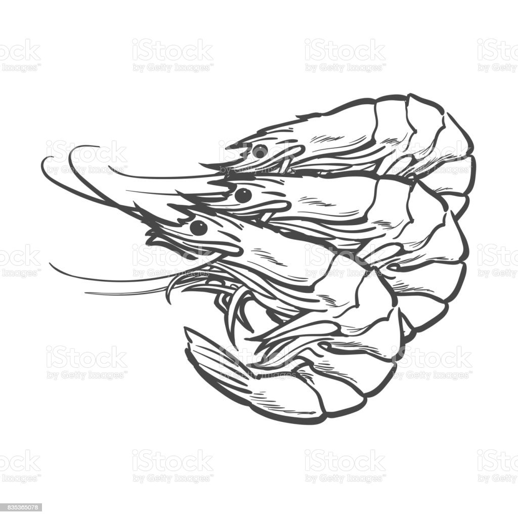 Vector Sketch Cartoon Sea Lobster ...