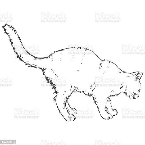 Vector sketch cat vector id522470719?b=1&k=6&m=522470719&s=612x612&h=azmgxloz coyg5drj4fcnu1qimal7ucjluchjfa0duq=