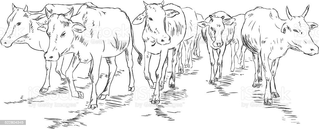 Vector Sketch Cow Herd vector art illustration