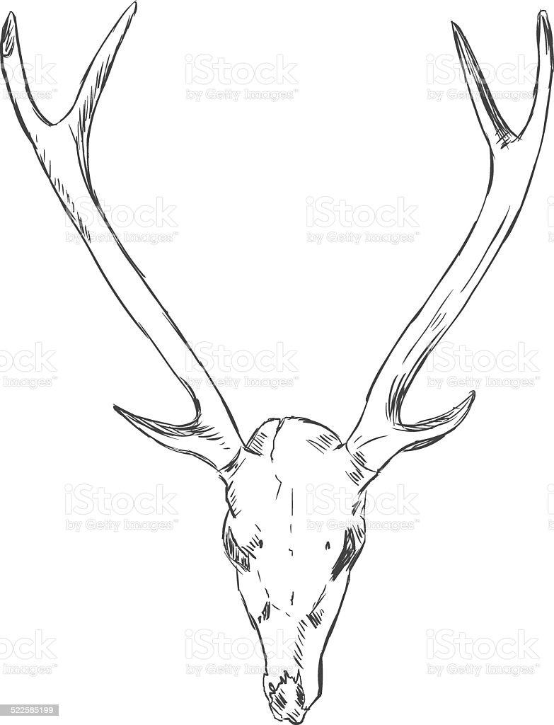 Vector Sketch Deer Skull Stock Vector Art & More Images of Anatomy ...