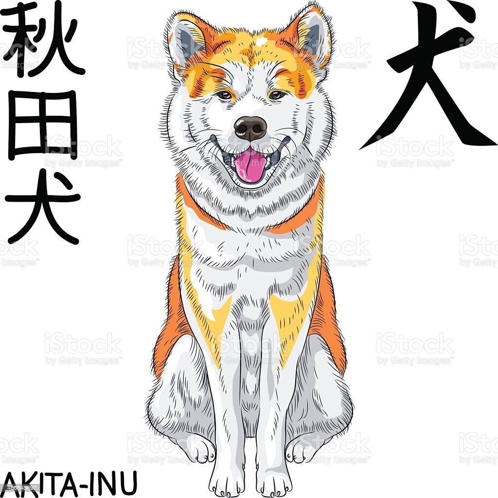 Wektor Szkic Pies rasy uśmiecha się Akita Inu japoński – artystyczna grafika wektorowa