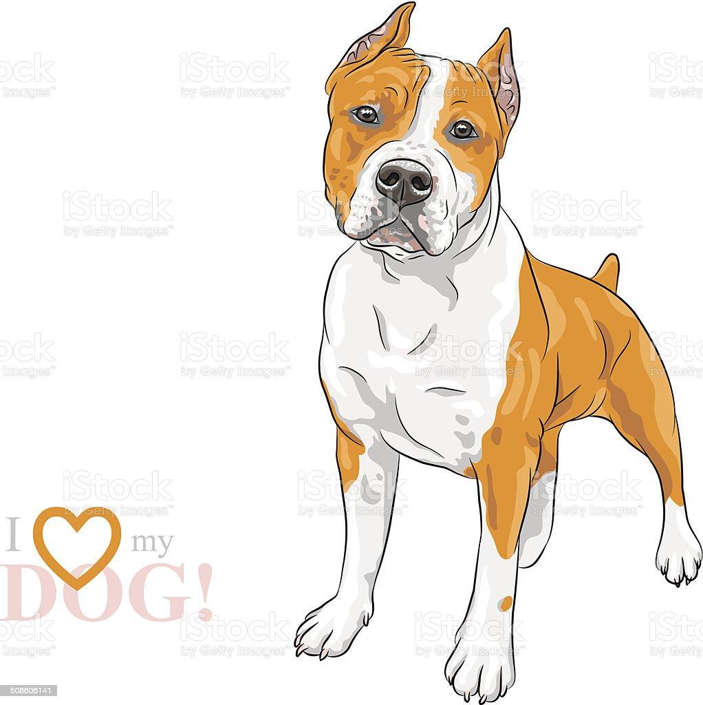 vector sketch dog American Staffordshire Terrier breed vector art illustration