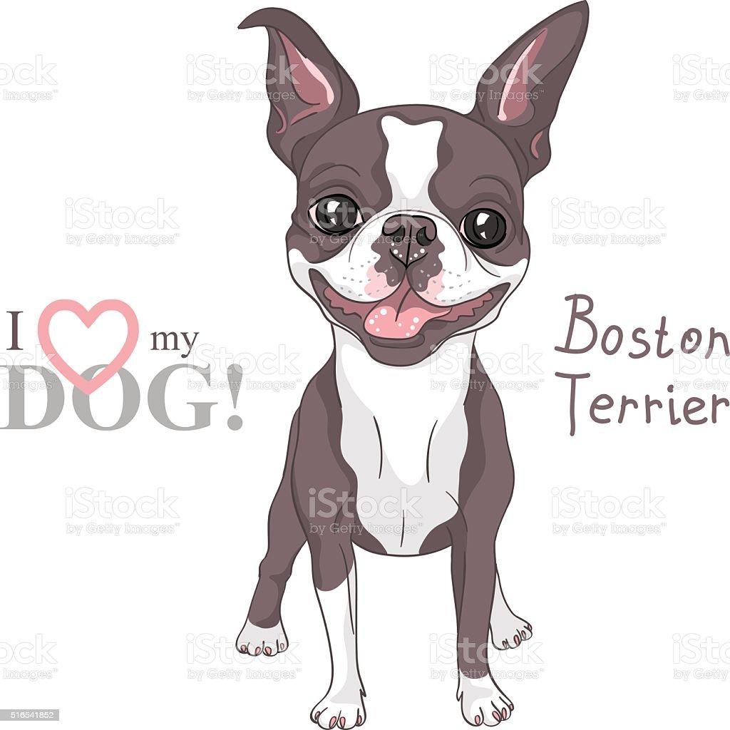 vector sketch dog Boston Terrier breed smiling vector art illustration