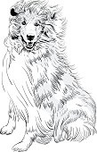 Vector sketch dog Rough Collie breed hand drawing vector
