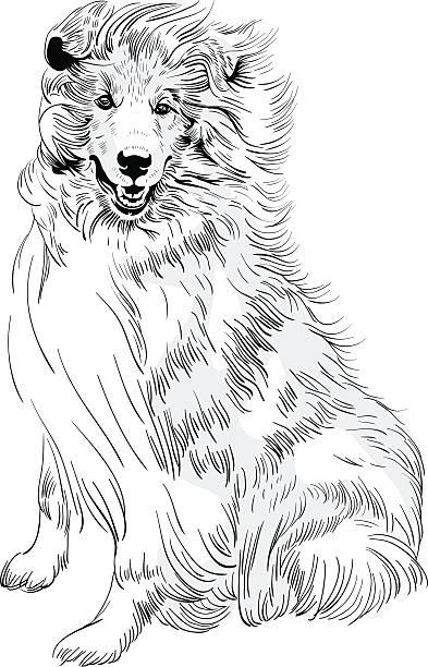 vektor-skizze hund langhaar-collie rasse hand-zeichnung - - collie stock-grafiken, -clipart, -cartoons und -symbole