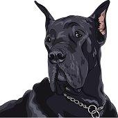 vector sketch domestic dog black Great Dane breed