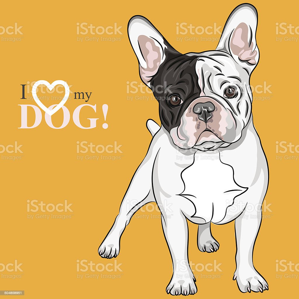 vector sketch domestic dog French Bulldog breed vector art illustration