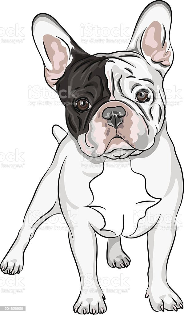 Vector Sketch Domestic Dog French Bulldog Breed Stock