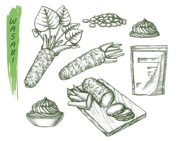 わけびや刺身のベクトルスケッチ - わさび点のイラスト素材/クリップアート素材/マンガ素材/アイコン素材