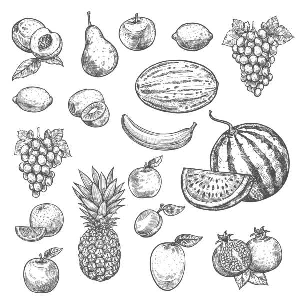 ベクター スケッチ果物分離アイコン - ぶどう イラスト点のイラスト素材/クリップアート素材/マンガ素材/アイコン素材