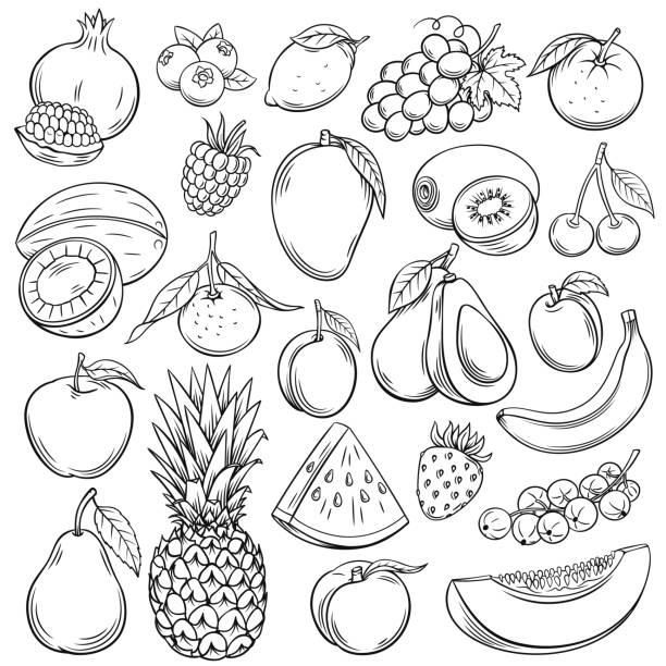 Vector sketch fruits Vector sketch fruits and berries icons set. Decorative retro style collection hand drawn farm product for restaurant menu, market label. Mango, blueberry, pineapple, mandarin and etc. avocado stock illustrations