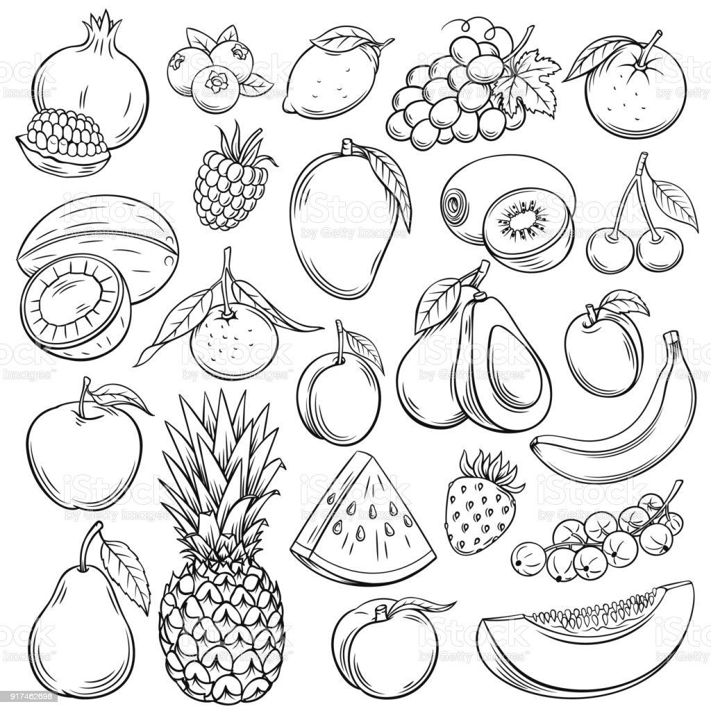 Frutas de dibujo vectorial - ilustración de arte vectorial