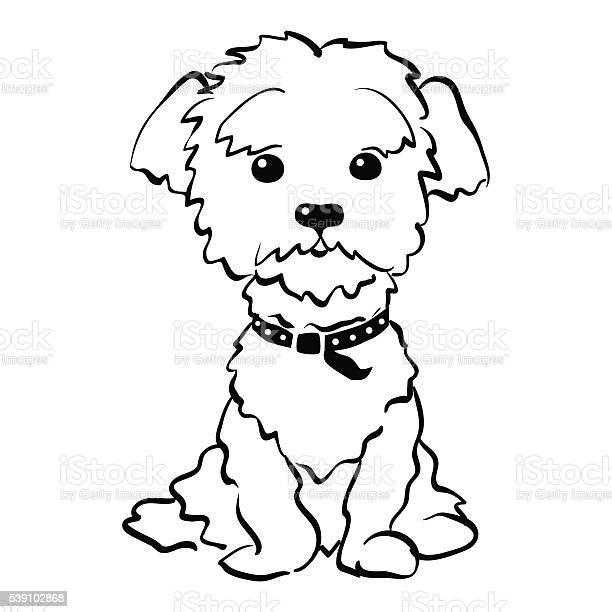 Vector sketch funny maltese dog sitting vector id539102868?b=1&k=6&m=539102868&s=612x612&h=p8 oggkwud5mjd3jxtex5kxiqtkkj9htpfpbo omzl8=
