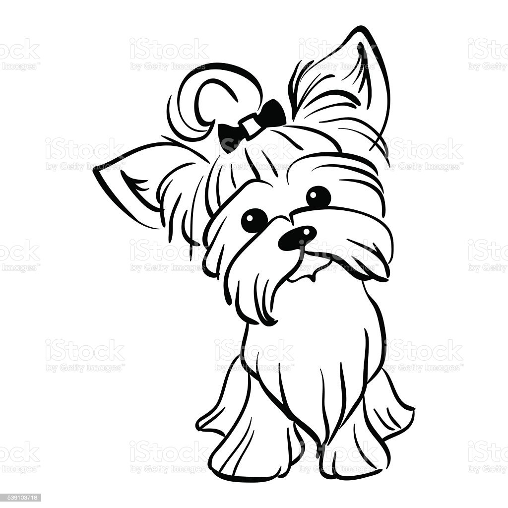 Line Drawing Of Yorkshire Terrier : Vector sketch funny yorkshire terrier dog sitting stock