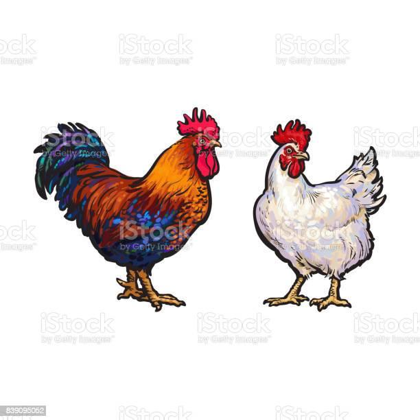 Vector sketch hand drawn rooster set isolated vector id839095052?b=1&k=6&m=839095052&s=612x612&h=ymqo v7dwdezhbvi9gqpmwovl4e ld8g2nex6a3h9pg=