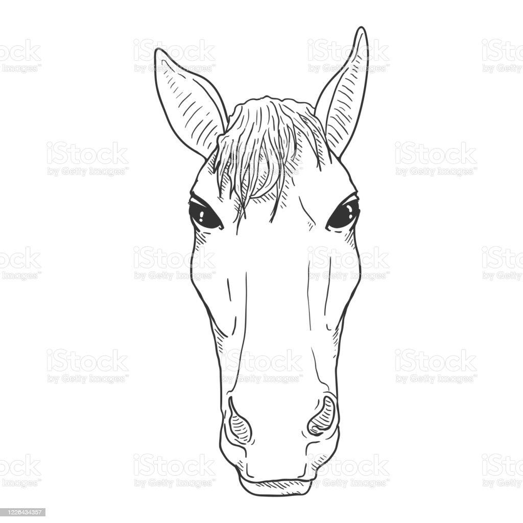 Vector Sketch Horse Head Stock Illustration Download Image Now Istock