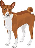 color sketch of the hunting dog Basenji  breed